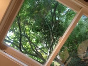 Tomash_listing window