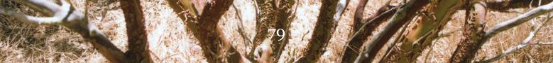 79 banner